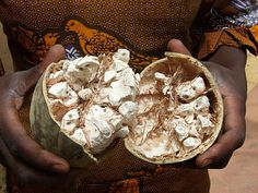 Closer look to the #Baobab pulp (so yummy). Kids & Adults love this natural and local candy #SenegaleseTaste