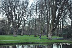 Walking the dog in the park life in Dog Walking, Amsterdam, Park, Plants, Photography, Life, Fotografie, Photography Business, Parks
