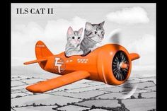 Airplane Decor, Aviation Humor, Cabin Crew, Tigger, Wwii, Cats And Kittens, Automobile, Aircraft, Boat