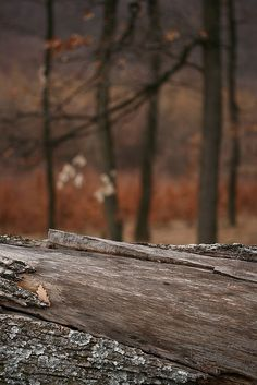 'Fallen Tree' by sonofsteppe, via Flickr. | Look at my related 'Pure Natural' lightbox on iStock » http://www.istockphoto.com/search/lightbox/5097848/#e60188
