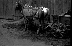 Származási helye » Helység: Felcsík (Ţara Ciucului) » Megye: Hargita (Harghita)  Készítés ideje: 1960 Készítette: Vámszer Géza Lelőhely: Kriza János Néprajzi Társaság fotóarchívuma Tao, Horses, Animals, Animales, Animaux, Animal, Animais, Horse
