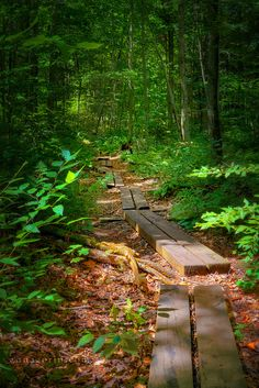 Path through the Adirondacks