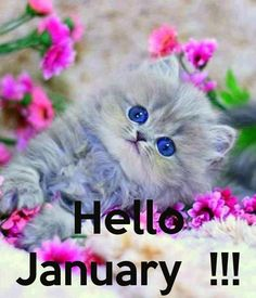 Image result for hello january cute images
