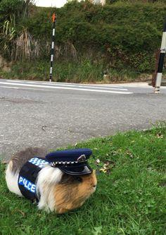 New Zealand Police Department's mascot, Constable Elliot