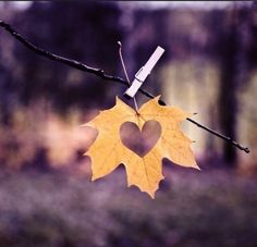 Let life be beautiful like summer flowers and death like autume leaves.
