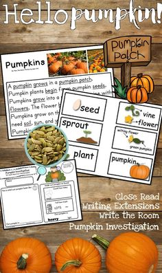 Hello Pumpkin! I love how much my kids love this unit! It is so amazing to listen to their vocabulary grow and their writing skills take off! They LOVE doing the Pumpkin Investigation! Especially counting the seeds, measuring the circumference and recordi