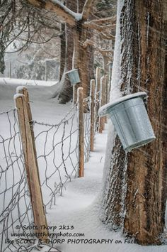 Scott R Thorp Photography    Maple syrup pails - Rollinsford, NH Today I captured in my mind one of the true iconic New England images. This is up there for me with town Christmas trees with pristine snow or a bull moose with velvet hanging off its antlers. These all happen within a short window of opportunity. This one needs to be in the months of February or March, during the day, during a snow storm with sticky snow
