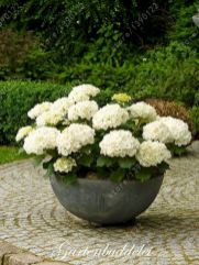 Spectacular container gardening ideas (41)