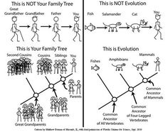 Family Tree vs Phylogeny