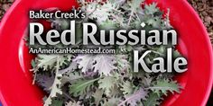 I'm a big fan of Baker Creek and the seeds they sell. If you are into organic/natural gardening...