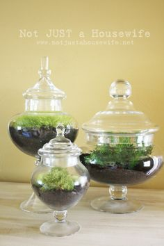 I LOVE these terrariums!  Now I need Hobby Lobby to put their glassware on sale for 50% off!