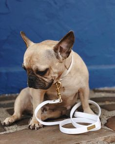 The HOUND Leash in Marshmallow Jellies