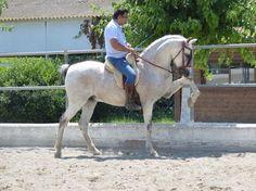 Hispano/Árabe, Alta escuela y Doma Vaquera en venta en Cataluña :: HE4489B05 Equestrian Style, Equestrian Fashion, Conquistador, All The Pretty Horses, Horse Breeds, Horse Riding, Dressage, Animal Drawings, Mustang
