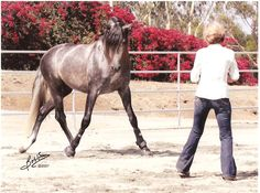 Carolyn Resnick Liberty Horse Training #carolynresnick #libertyhorsetraining #horse