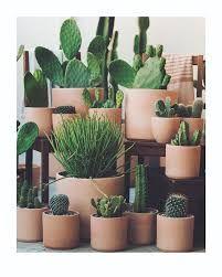 Image result for la cactus co