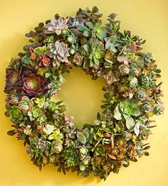 Succulent wreath from BHG w/instructions.  Probably fairly cheap to make, but labor intensive...