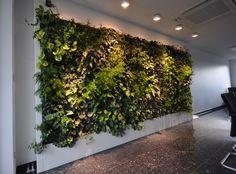 Naturwand - Mooswand - Innovative Wandgestaltung - Naturwand Innovative Wände