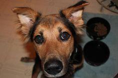 Depois de três meses de tratamento no veterinário, o cão Leo se recuperou e ganhou uma nova família.