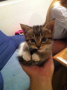 And finally, this tiny ball of fur who reminded us everything is going to be OK. | 21 Very Important Kitten Pictures You Need To See
