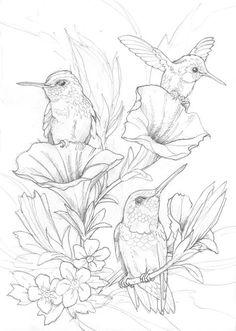 Bergsma Gallery Press :: Paintings :: Originals :: Original Sketches :: 2014/Hummingbirds - Original Sketch