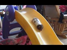 Funny Hamsters Videos Compilation 2017 | Cute And Funniest Hamster - YouTube