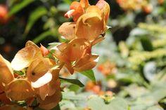flores sede pance Santa Monica, Flowers, Plants, Home, Photo Galleries, Plant, Royal Icing Flowers, Flower, Florals
