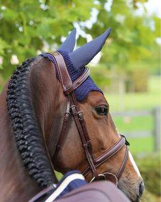 Equestrian Performance