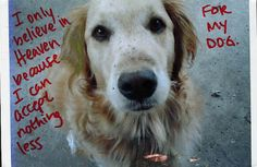 post secret. I believe in Heaven because I can accept nothing less for my dog.   :D true.