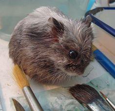 .hamster