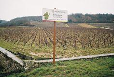 Echezeaux, Grand Cru