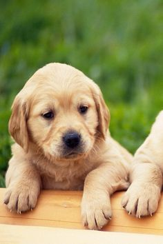 7 Best Dog Wallpapers Images On Pinterest Animal Kingdom Cute