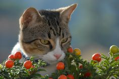 Gin the cat Gin, Cats, Animals, Gatos, Animales, Animaux, Animal, Jeans, Cat