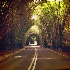 Túnel de Bambú - Country Club - Caracas Foto: Jorge Cruz