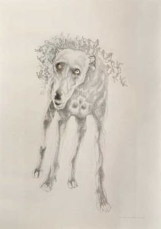 judith mason -Fleas on Time's Dog Pencil and coloured pencil on paper… South African Artists, Coloured Pencils, Fleas, Traditional Art, Painting & Drawing, Sketching, Moose Art, Textiles, Paper