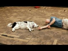 """Chaser: Unlocking the Genius of the Dog Who Knows a Thousand Words. Search """"Chaser dog border collie"""""""