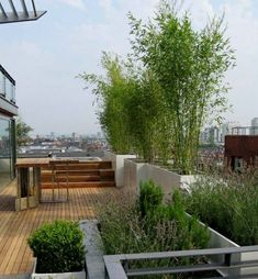 Bamboo trees rooftop balcony privacy protection screen