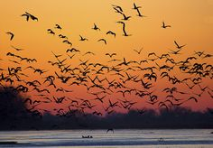 Check out photos of the sandhill cranes in Nebraska!
