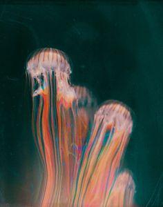 Recent Glitch Artworks on Behance Collage Des Photos, Photo Wall Collage, Collage Art, Psychedelic Art, Psychedelic Pattern, Art Inspo, Inspiration Art, Arte Peculiar, Art Design