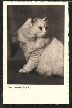 Cat Ein schönes Profil.