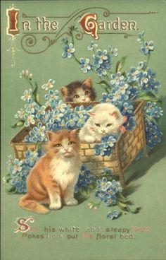 Kittens in the Garden ~ Vintage postcard
