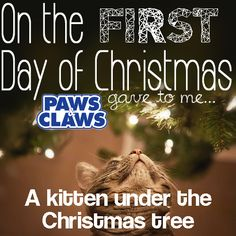 """""""LIKE"""" Paws & Claws and """"SHARE"""" this photo to win a $100 GIFT CARD!    Please note, we don't support giving pets as Christmas gifts, as they can sometimes end up unwanted after the holidays, it simply goes with the theme of the song and this kitten is only playing with the branches :]    Enter our 12 Days of Christmas contest for a chance to win a daily prize of a $20 gift card, and a grand prize of a $100 gift card. Simply """"like"""" and """"share"""" to enter for each of the 12 days."""