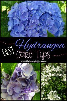Easy Hydrangea Care tips plus a really simple DIY Hydrangea Mason Jar Arrangement that you can make. {www.thefarmgirlgabs.com}
