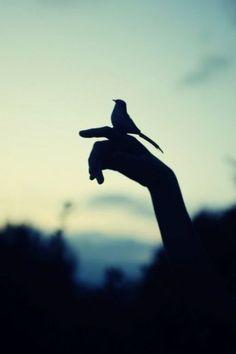 i like birds.