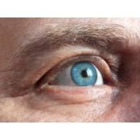 Szemvidítófű: Rendkívüli gyógynövény a szemre, nagyban javítja a szem egészségét. A virágai hasonlítanak a szemre, ezért is szokták azt mondani, hogy az a gyógynövény arra a szervre való amilyen alakja van. Segít enyhíteni a Bridge Pattern