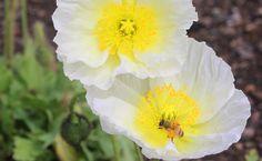 Bees are pollinators!