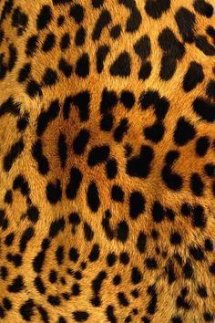 Animal print  ♥♦♣