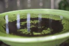 Empty out containers of stagnant water to help prevent mosquito problems. Mosquito Larvae, Mosquito Repelling Plants, Diy Garden Fountains, Garden Ponds, Container Gardening, Gardening Tips, Home Remedies For Mosquito, Keeping Mosquitos Away, Mosquito Spray