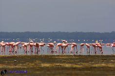 Lake Nakuru, the bird watchers paradise