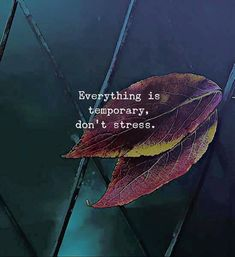 Quotes About Strength Stress Motivation Ideas Wisdom Quotes, True Quotes, Words Quotes, Motivational Quotes, Inspirational Quotes, Happy Quotes, Qoutes, Cute Quotes For Life, Love Quotes For Her