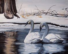 Canadian Wildlife Artist featuring original works of art and prints Original Artwork, Original Paintings, Trumpeter Swan, Canadian Wildlife, Wildlife Art, Bird Species, Swans, Bird Art, Art For Sale